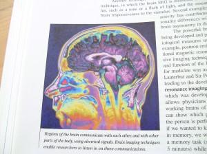 """Vår hjärna - Bilden är tagen ur """"Personality Psychology: Domains of knowledge about human nature"""" av Larsen, R.J. & Buss, D.M. (2008). 3:e upplagan."""