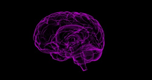 brain-1787622_1920.jpg